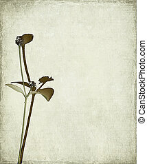 Long stem and seed head background