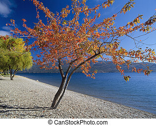 red tree by the lake