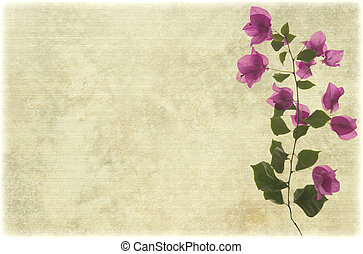 Pink bougainvillea branch on ribbed parchment