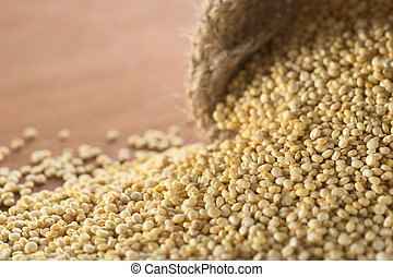 Raw white quinoa grains in jute sack on wood. Quinoa is grown in the Andes and is valued for its high protein content and nutritional value (Very Shallow Depth of Field, Focus running diagonally throu