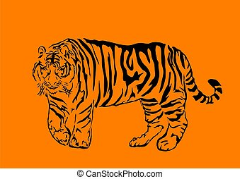 bengal tiger - Black bengal tiger isolated on orange...