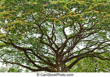 large flowered tree