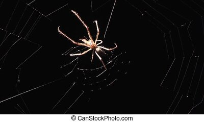 Spider at night on the hunt