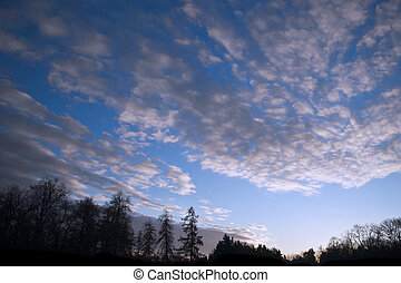 Silhouette of forest - Slhouettes of bare trees on blue...