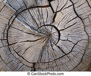 Split tree trunk - cross section of split old weathered tree...