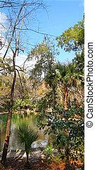 Wekiwa Springs in Florida