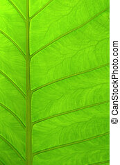 Abstract Background Texture Of A Beautiful Green Tropical Leaf