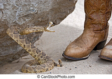 Rattle Snake - Rattle snake attacking a pair of boots
