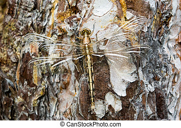 Dragonfly full-length sitting on the tree bark