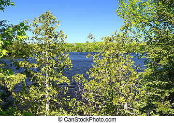 Little Horsehead Lake - Wisconsin - View through pine trees...
