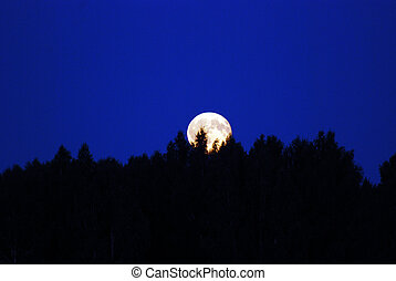 full moon - large full moon above trees