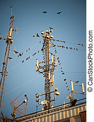 Birds around telecommunication tower - Flock of birds around...