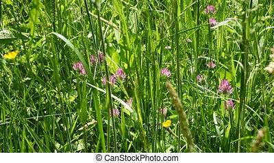 Meadow - wild meadow