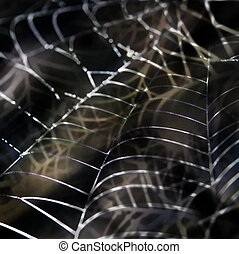 Cobweb with morning dewagainst dark background