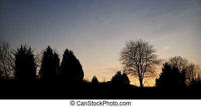 Trees in evening - silhouettes of bare trees against blue...