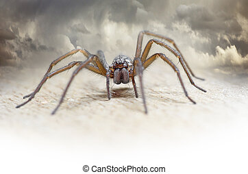 Hairy spider - Close up of hairy spider with cloudy sky