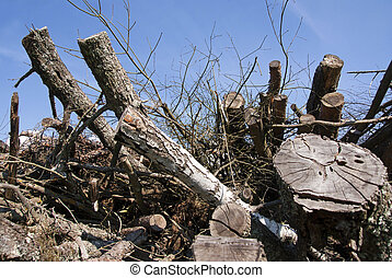 Dry trees - Heap of old dry trees and blue sky