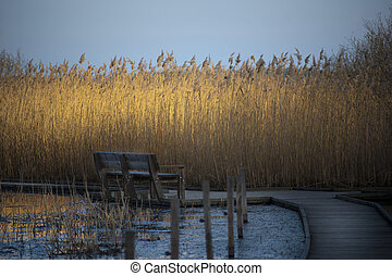Bench and reeds