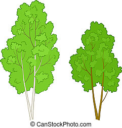 Trees deciduous - Vector, the forest green deciduous trees...
