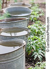 Five buckets with water - Five old iron buckets with water,...