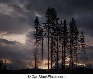 Scary trees - Scary landscape with dark trees in the evening