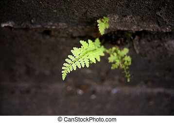 Fern on concrete - Fern growing on a concrete staircase