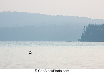 Common loon on the lake at the sunrise