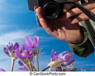 Photographer taking image of blooming wildflowers -...