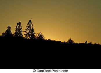 Golden Algonquin Treeline - A beautiful sunset with the...