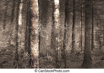 Spooky forest