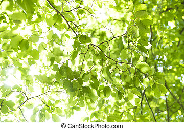 Lush foliage - vibrant green background of lush foliage