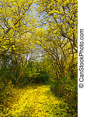 Yellow trees and the road - On March every year,they will...