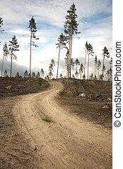 Dirt road in clearing - Dirt road going up a small hill in a...