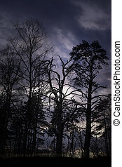 creepy forest - Creepy trees with gloomy blue sky