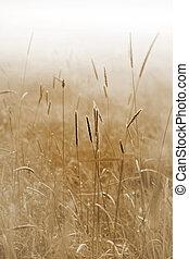 gras in a field ona misty morning