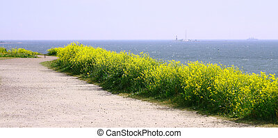 Panorama View Of Finland Gulf with yellow flowers in the foreground, Suomenlinna Sveaborg Helsinki