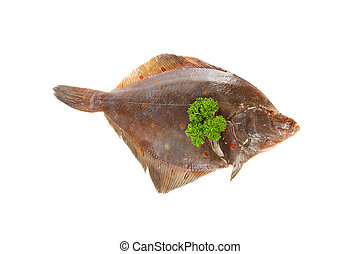 raw plaice fish - one raw plaice fish isolated on white...