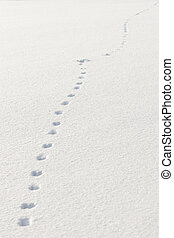 Footprints in snow, made by a hare or a rabbit