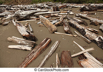 Driftwood - A stock photo of some driftwood on a beach.