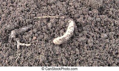 Worm - Film worm 7 syuzhetov.syuzhet5