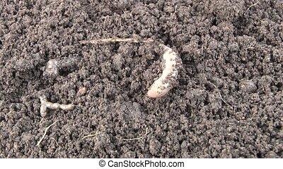 Worm - Film worm 7 syuzhetov.syuzhet6