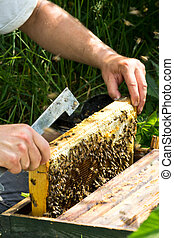 insight to frame in the beehive
