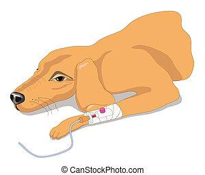cão, doente
