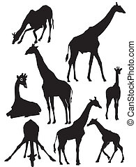 set of silhouette of giraffe