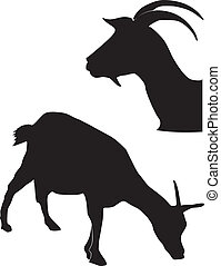 silhouettes of goats
