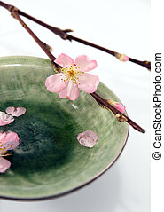 Cherry twig with buds and blossom, and a green plate with...
