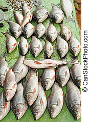 Fish market - Freshwater fishes arranged for sale in a fish...