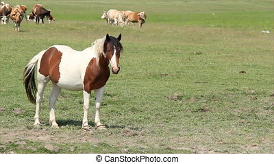 horse and cows in pasture