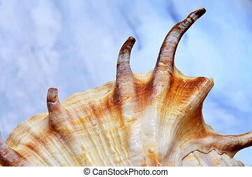 conch - closeup of a conch over the blue sky