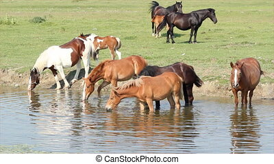 horses on watering-place